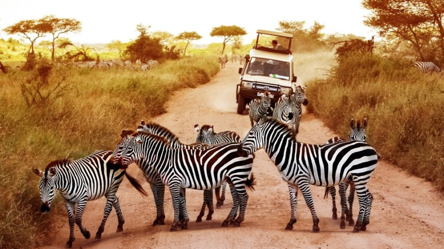 Bargain Flights, Bargain Flights From London, Blog, Cheap Flights, Cheap Flights From London, cheap flights from united kingdom, cheap flights to Zanzibar Tanzania, cheap tickets, cheap travel, direct flights, direct flights to Zanzibar Tanzania, Emirates Airline, flights, Flights Booking, Flights From London, Flights From United Kingdom, Kenya Airways, last minute flights, last minute flights to Zanzibar Tanzania, Zanzibar food, Qatar Airways, special offers, travel, Traveling, Turkish Airlines, United Kingdom, Zanzibar, Zanzibar cuisine, Zanzibar food, Zanzibar Travel Guide, Taipei Blog, Zanzibar blog, Zanzibar tourism, Zanzibar travel blog, Zanzibar tour, Zanzibar tourism places