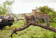 south africa 5, Cheapest Flights to Johannesburg South Africa
