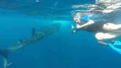 Chris and Whale Shark