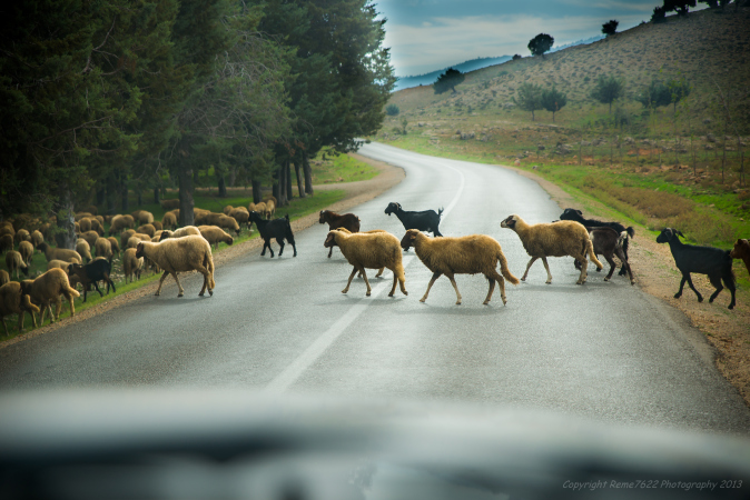 The road from Ifrane, Morocco, road trip, road safety