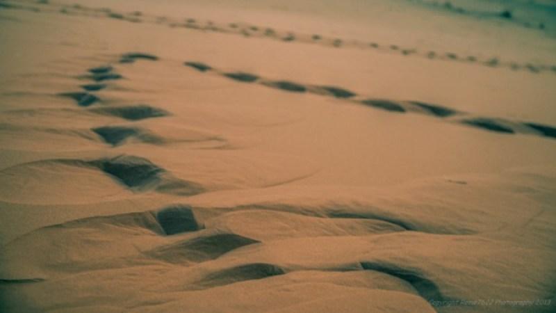 Footprints in the sahara, Erg Chebbi, Morocco