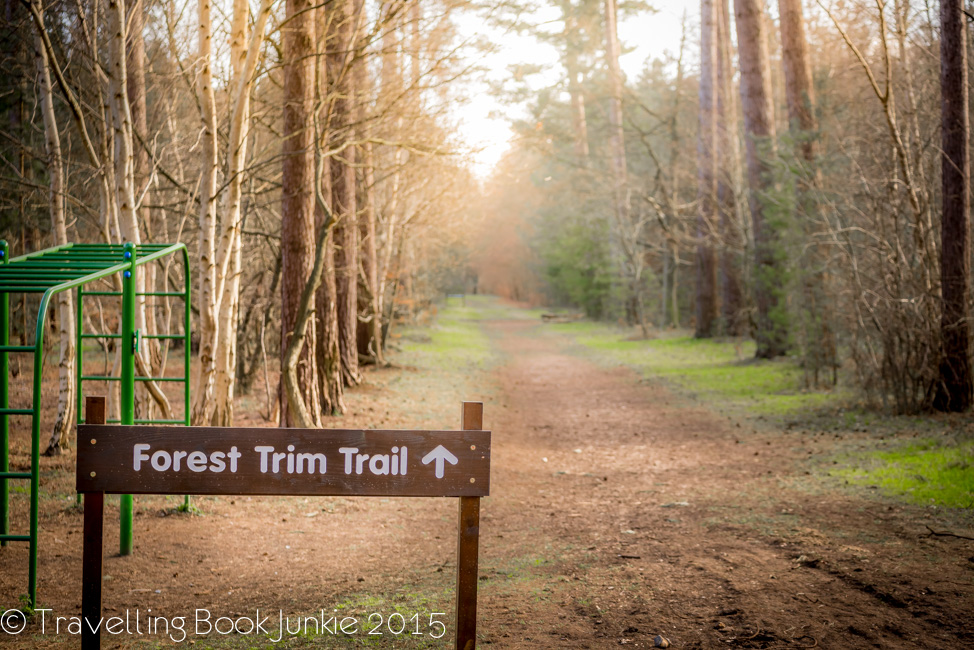 One of the walking trails thetford forest trim trail norfolk uk