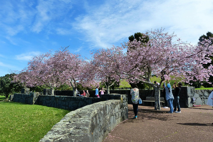 Cherry Blossom, Tokyo, Japan, Asia, Travelling, Travel, Travelling Book junkie