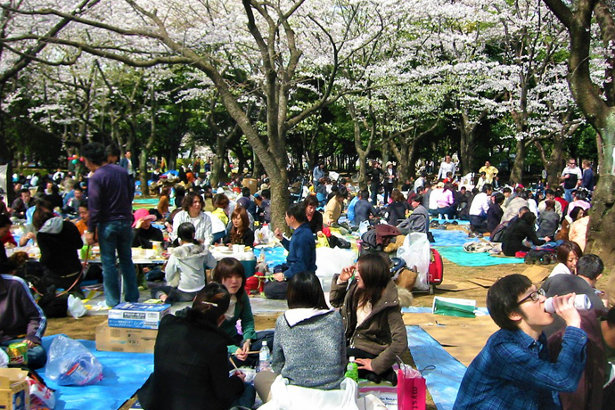Japan, Tokyo. Asia, Cherry Blossom, Travelling, Travel, Travelling Book Junkie