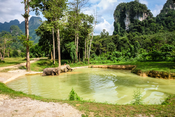 Image result for elephant hills rainforest camp images