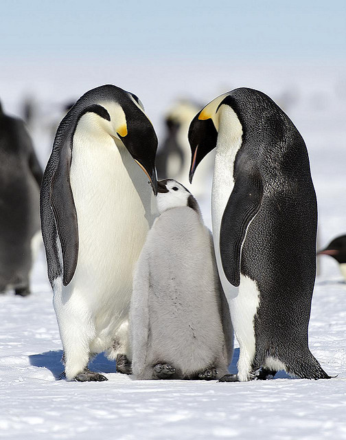 Antarctica Penguins, Luxury Travel, Travel, Travelling Book Junkie, wish list