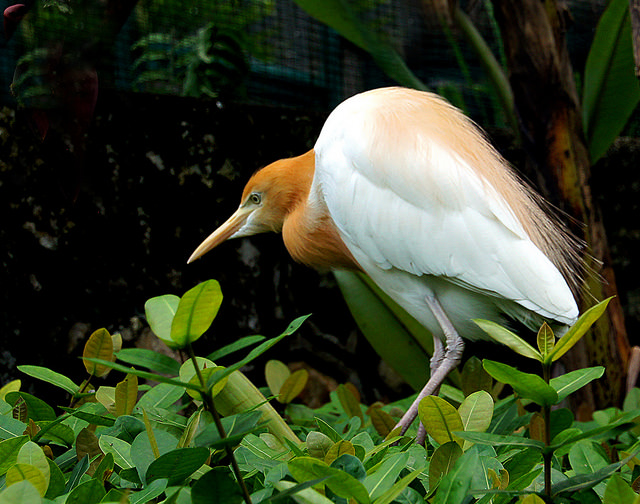 White Herons, Ubud, Bali, Indonesia, Travel, Travelling Book Junkie