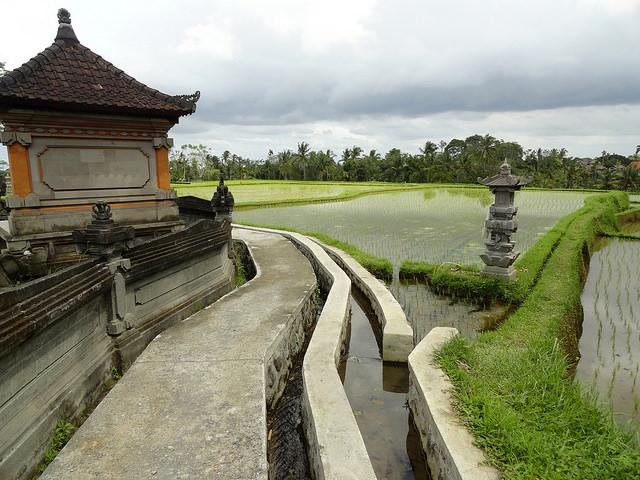 Campuhan Ridge Walk, Ubud, Bali, Indonesia, Travel, Travelling Book Junkie