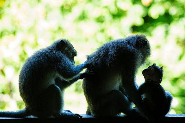 Monkey Forest, Ubud, Bali, Indonesia, Travel, Travelling Book Junkie