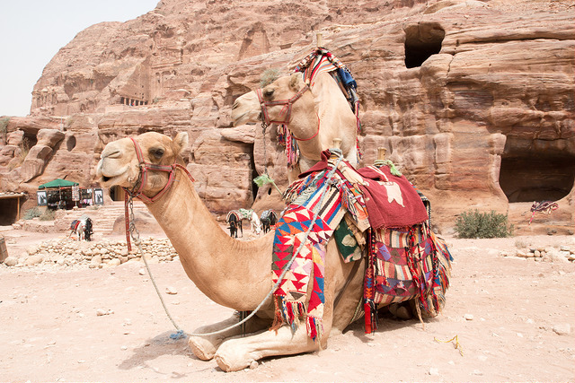 Exotic Places, Camels, Petra, Jordan