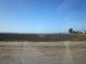 Fields around Salinas