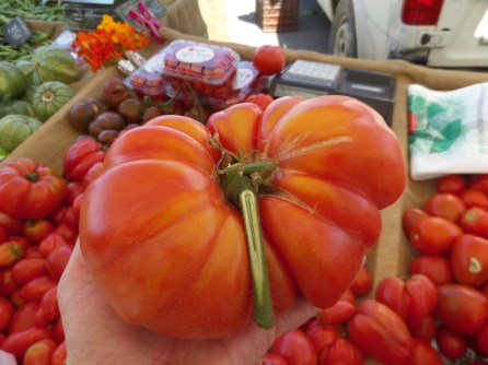 Look at how big these tomatoes are