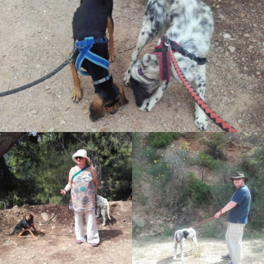 dogs - Packing it all in - 7 days in Skiathos