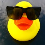 Cool duck