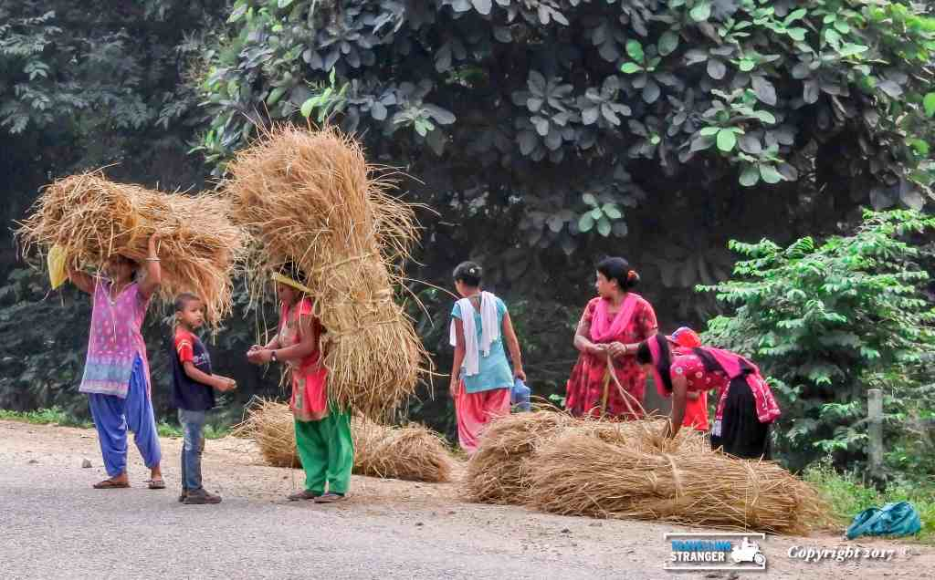 Nepalese ladies carrying hay.
