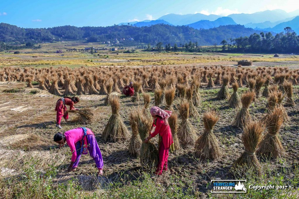 Nepalese ladies at work