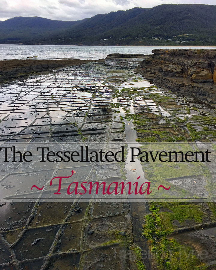 As the plaque tells us, 'its story began in an ancient, cold sea'. Today, the tessellated pavement lives on a mysterious shoreline at the bottom of the world.