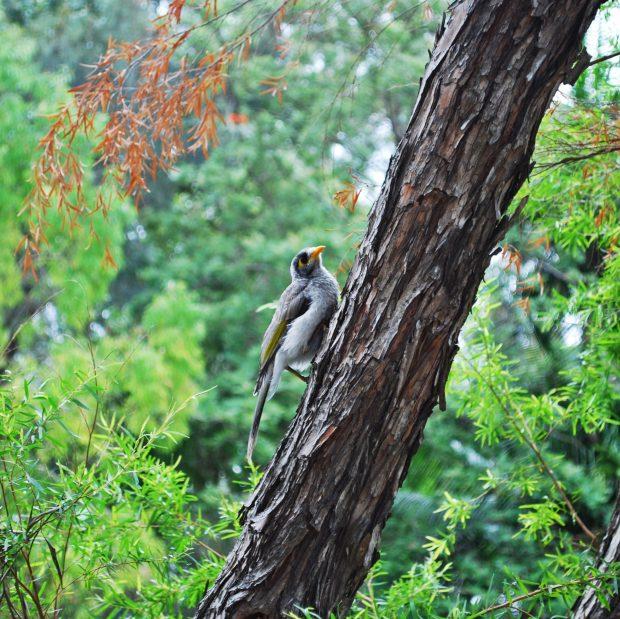 Brisbane's City Botanic Gardens are full of wildlife