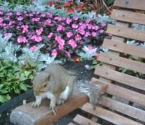 squirrel Regent's Park Sarah Blinco