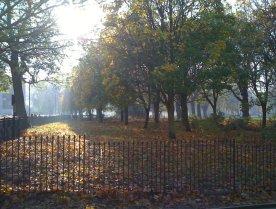 autumn-leaves-through-the-window