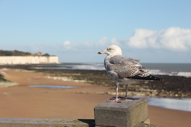 Broadstairs and Botany Bay offer perfect days out in Kent, and are an ideal option for a weekend or day trip from London, easily accessible on the train
