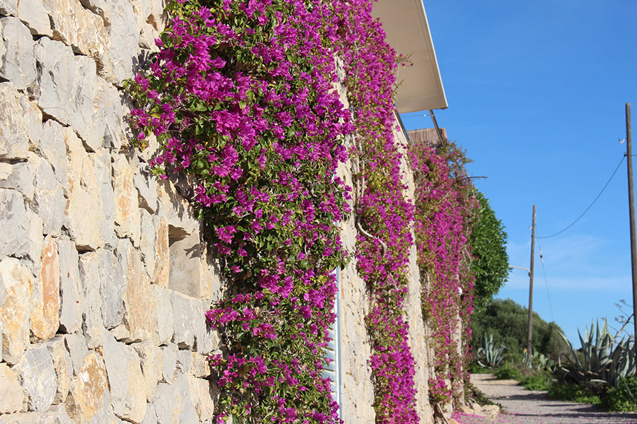 wall-ibiza in winter -travellivelearn-sarah-blinco