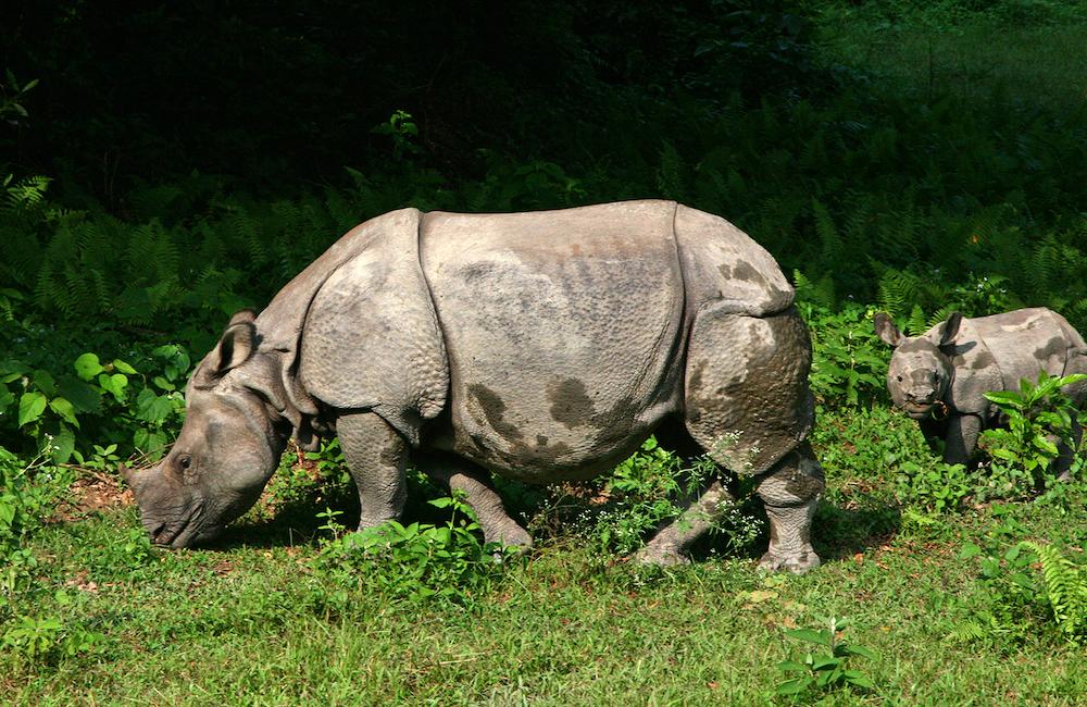 De mooiste nationale parken ter wereld Chitwan National Park Nepal
