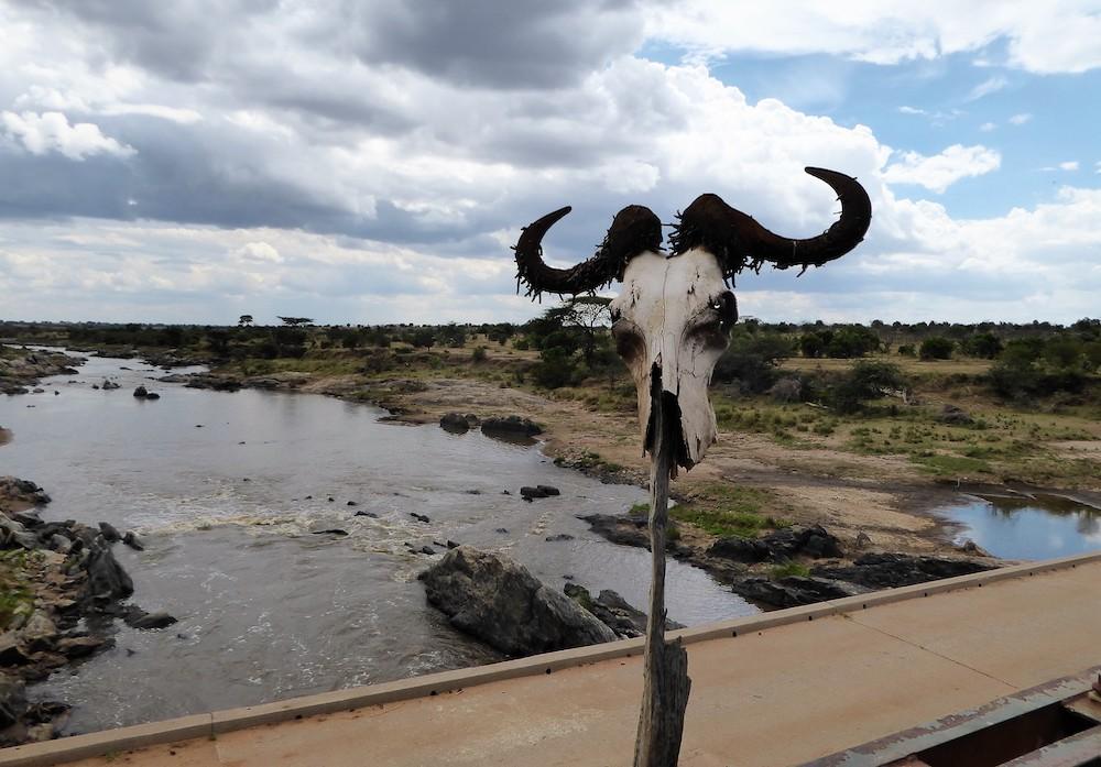 De mooiste nationale parken ter wereld Masai Mara National Park Kenia