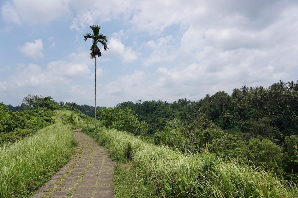Campuhan Ridge Walk Ubud bali Indonesië