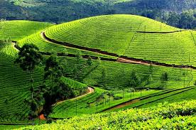Kerala Munnar Alleppey 3 Night 4 Days Tour Package. 34