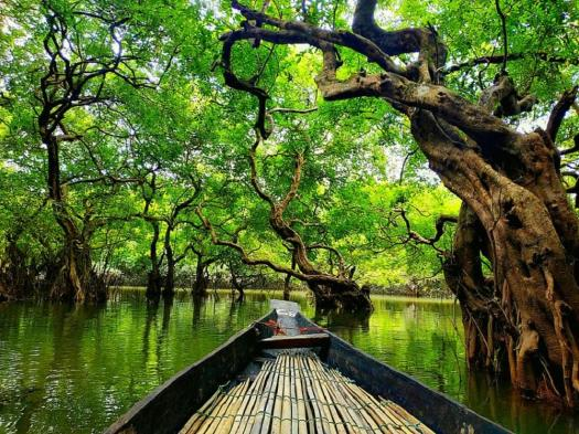 Ratargul Swamp Forest: Travel Guideline (A To Z) - Travel Mate