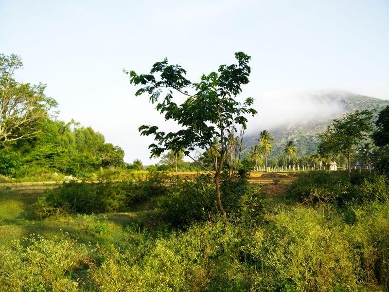 Trip to Nandi Hills