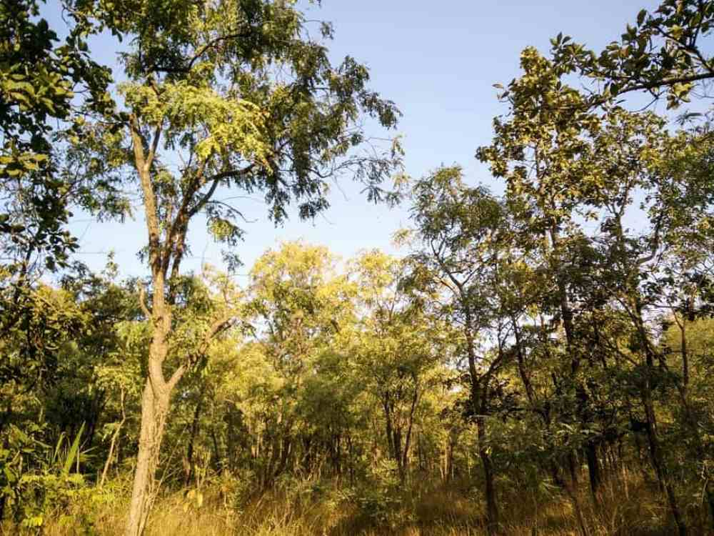 Satpura national park walk