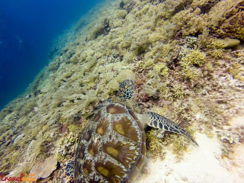 Scuba Diving in Gili Islands