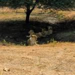 Devalia safari park