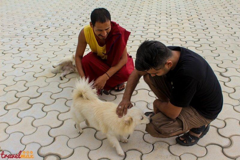 Tashi Lhumpo Monastery Bylakuppe