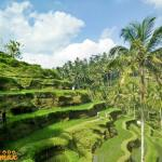 Talelagang Rice Fields