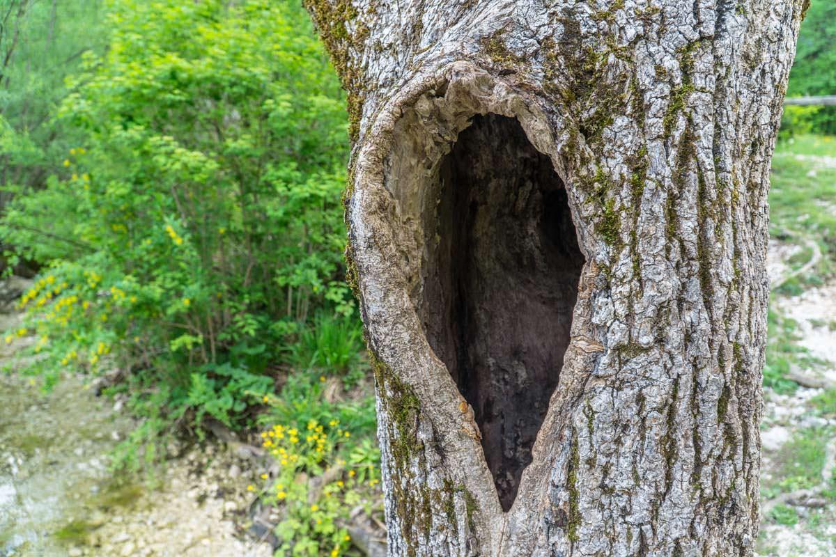 """Herzbaum"" im Nationalpark Triglav"