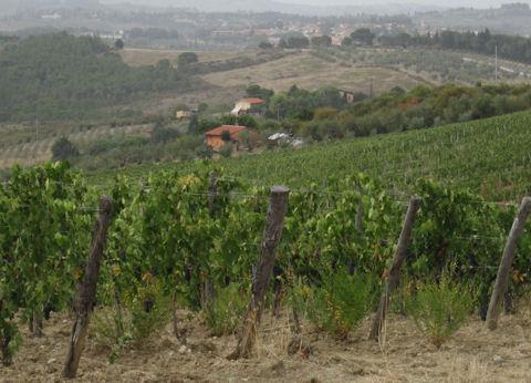 Chianti Classico - Hills of Tuscany