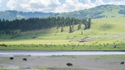 Lamar Valley Yellowstone National Park Montana