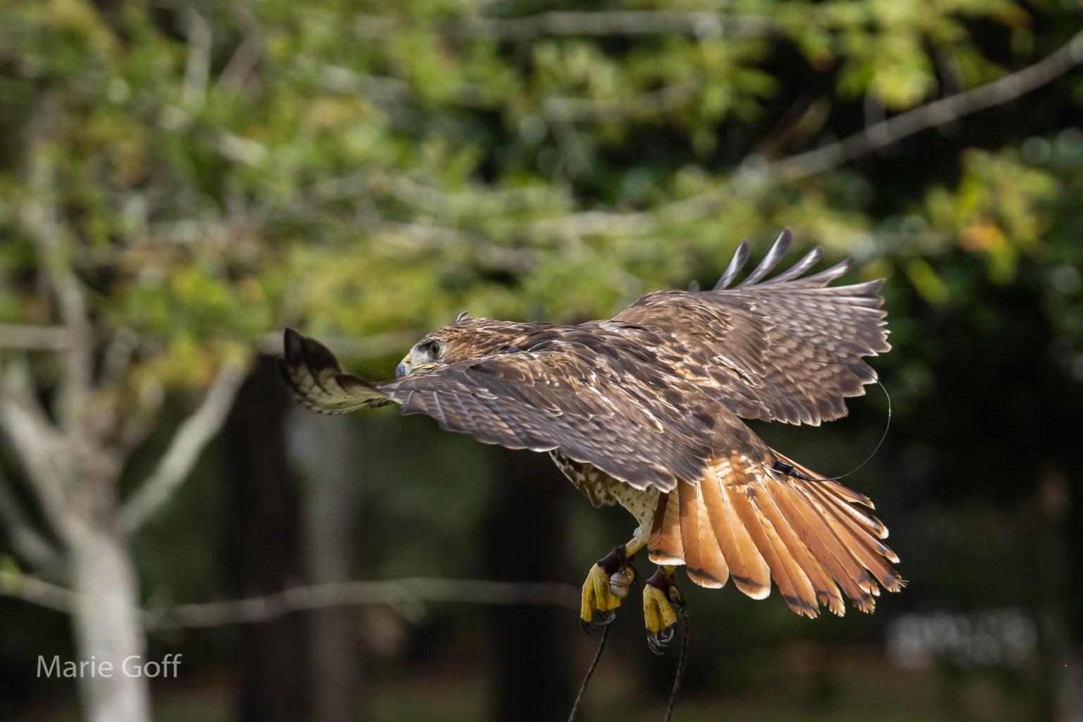 Tack sharp photos of birds-in-flights-in-flight