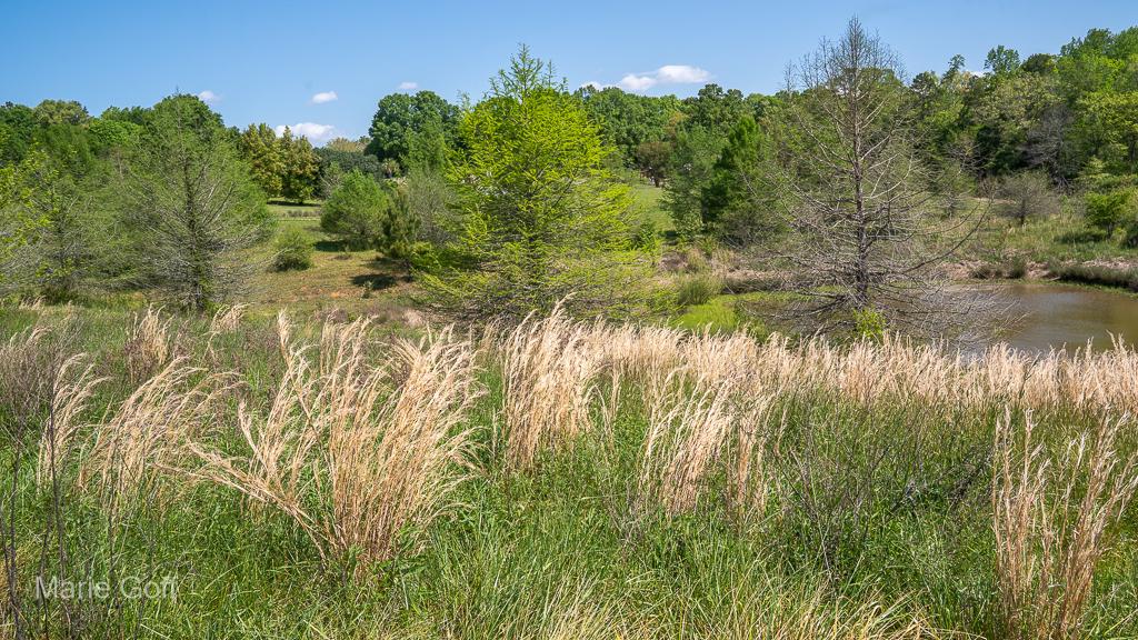 Piedmont prairie