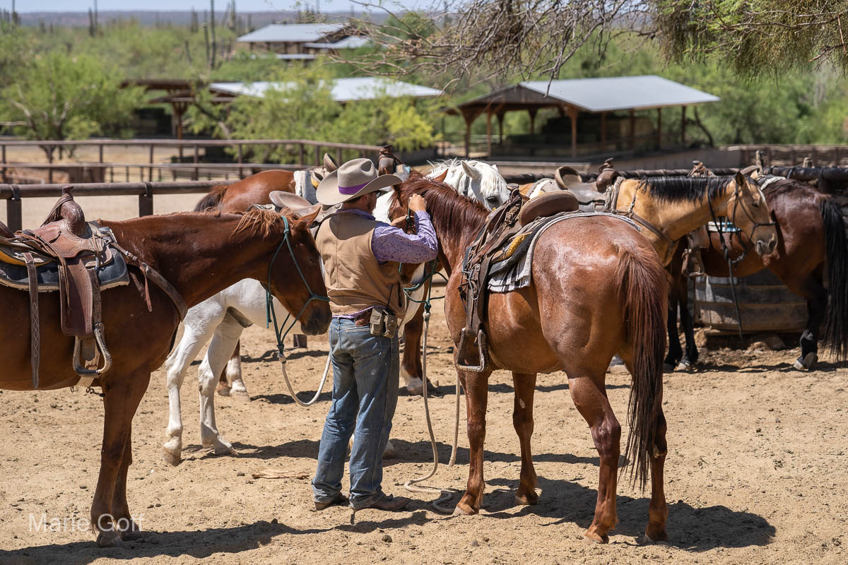 Reasons to love Tanque Verde Ranch