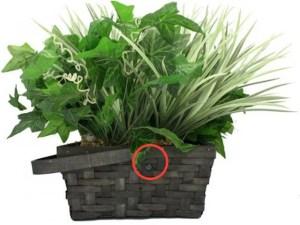 House Plant hidden camera