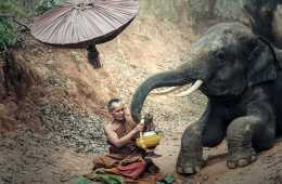 stop elephant rides find an ethical elephant sanctuary