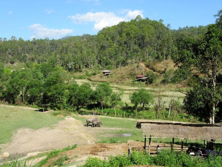 elephant nature park thailand - ethical elephant sanctuary