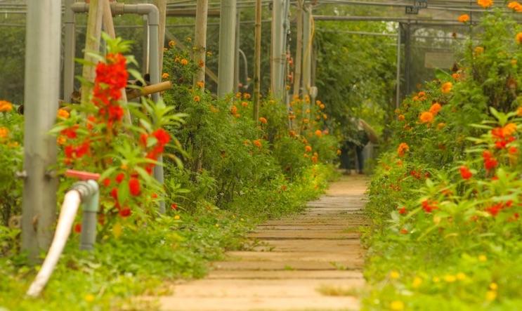 Almanity Resort has its own organic food garden