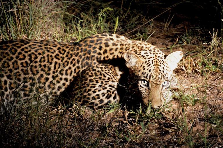 take a night safari in africa