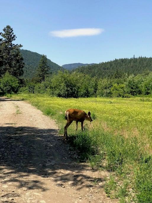 nature trails around our RV