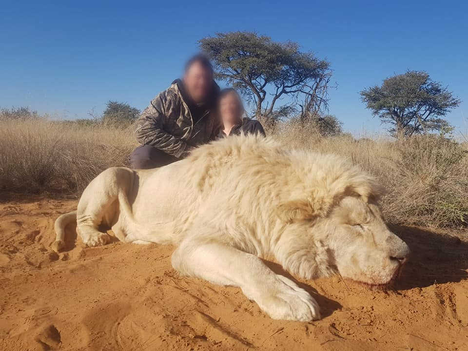 Couple poses over killed lion